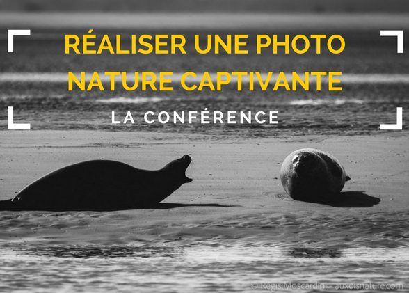 Comment réaliser une photo nature captivante.