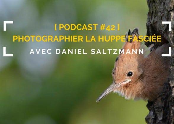[Podcast #42] Photographier la huppe fasciée avec Daniel Saltzmann