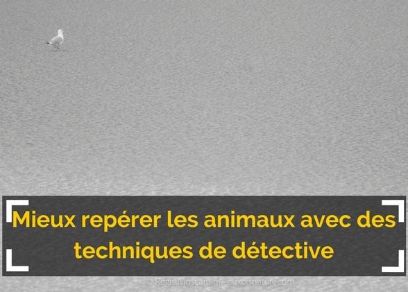 Mieux repérer les animaux en utilisant des techniques de détective