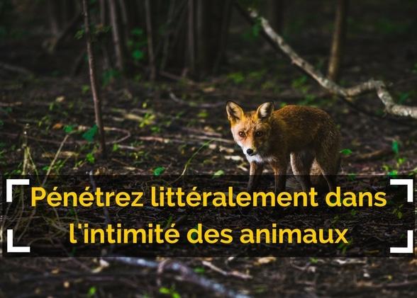 Pénétrez littéralement dans l'intimité des animaux