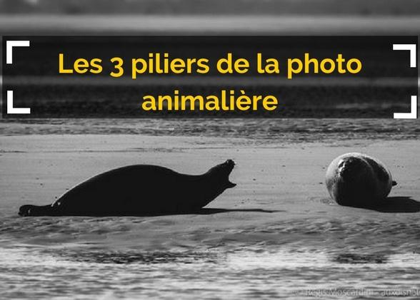 Les 3 piliers de la photo animalière à connaitre