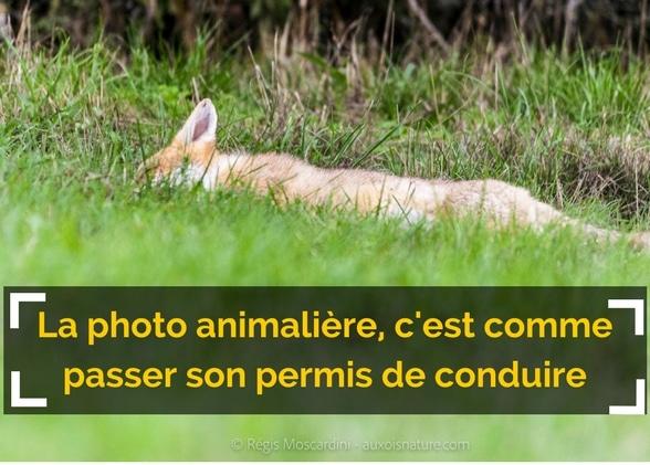 La photo animalière : c'est comme passer son permis voiture