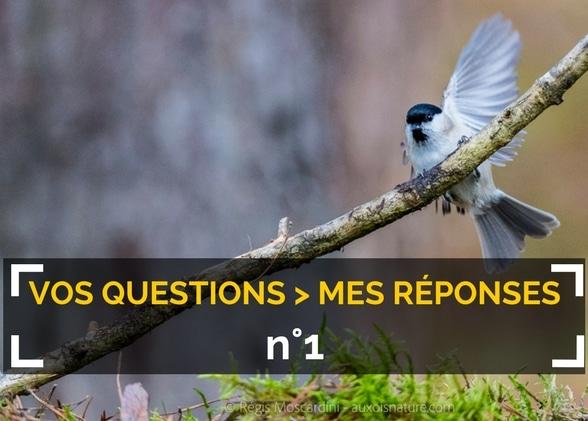 Mes réponses à vos questions de photo animalière- #1