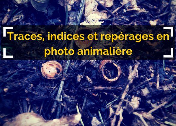 Traces, indices et repérages pour la photographie animalière