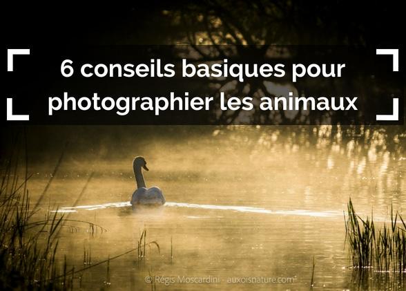 6 conseils basiques pour photographier les animaux sauvages