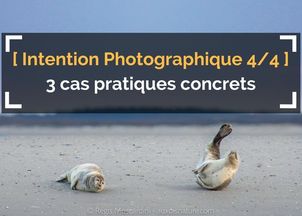 [L'Intention Photographique – 4/4] 3 cas pratiques décortiqués