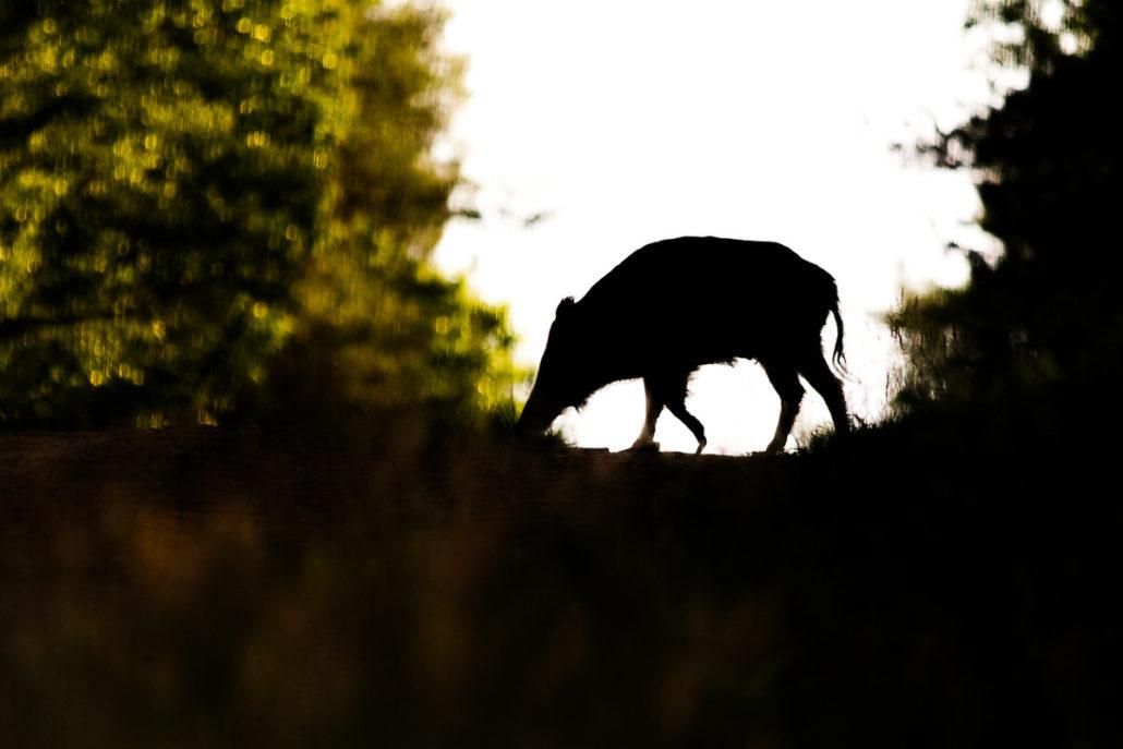 photographier les mammifères