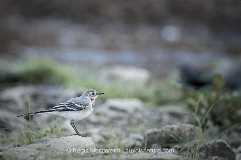 3 étapes pour photographier les oiseaux en bord de rivière