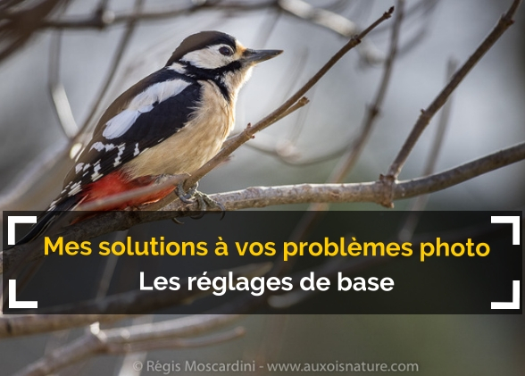 Mes solutions à vos problèmes de photo animalière #2 – Réglages photo basiques