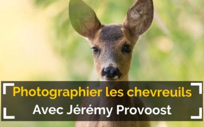 [Podcast #59] Photographier les chevreuils avec Jérémy Provoost