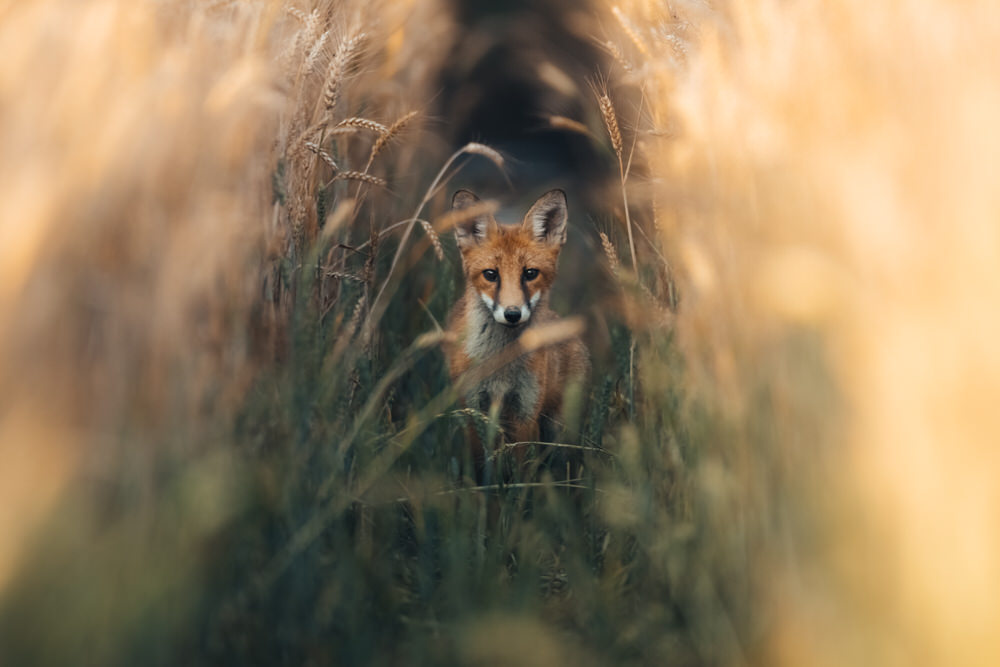 jeremy-provoost-photo-animaliere