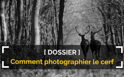 Comment photographier le cerf ?