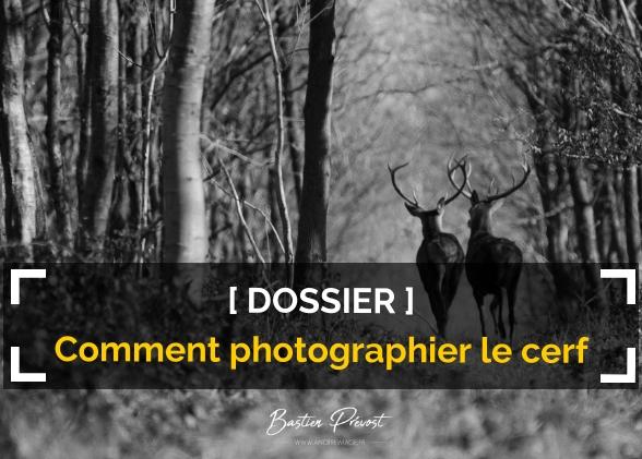 Comment photographier le cerf ?