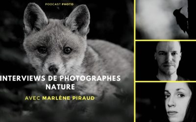 [Podcast #74] Photographier les animaux de la forêt avec Marlène Piraud
